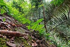 Tropisch regenwoudlandschap, ecosysteem, Thailand royalty-vrije stock foto