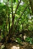 Tropisch Regenwoudlandschap Mexico Cancun stock foto