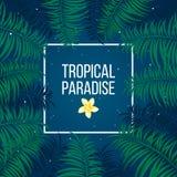 Tropisch sterrig van het nachtparadijs malplaatje als achtergrond vector illustratie