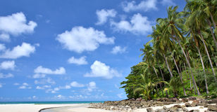 Tropisch strand Royalty-vrije Stock Afbeelding