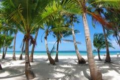 Tropisch strand. Stock Foto's