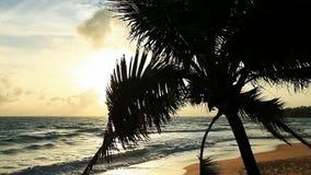 Tropisch strand stock video