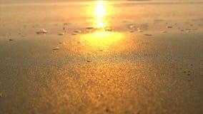 Tropisch strand bij zonsopgang stock footage