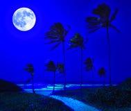 Tropisch strand in Cuba bij nacht Stock Foto