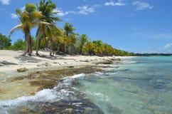 Tropisch Strand, Dominicaanse Republiek Stock Afbeeldingen