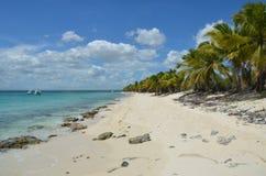 Tropisch Strand, Dominicaanse Republiek Royalty-vrije Stock Afbeelding