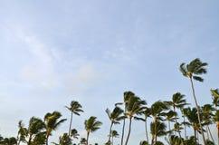 Tropisch Strand, Dominicaanse Republiek Stock Foto's