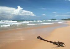 Tropisch strand en palmvarenblad royalty-vrije stock afbeelding