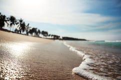 Tropisch strand met dof Stock Afbeeldingen