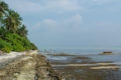 Tropisch strand met droge koralen bij het lokale eiland Fenfushi Stock Afbeelding