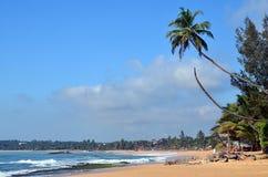 Tropisch strand met grote palm en blauwe hemel door het overzees Stock Afbeeldingen
