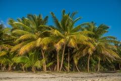Tropisch strand met kokosnotenpalmen Royalty-vrije Stock Afbeeldingen