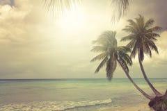 Tropisch strand met kokospalm Royalty-vrije Stock Foto