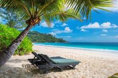 Tropisch strand met ligstoel onder palm royalty-vrije stock foto's