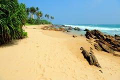 Tropisch strand met palm Stock Foto's