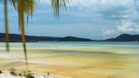 Tropisch strand met palmbladen op de hemel stock video