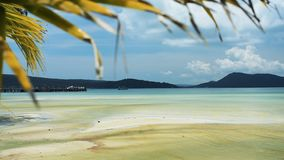 Tropisch strand met palmbladen op de hemel stock videobeelden