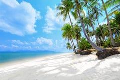 Tropisch strand met palmen Stock Afbeeldingen