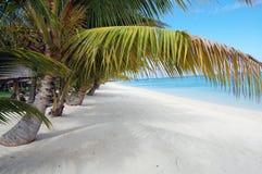 Tropisch strand met palmen Stock Foto