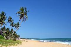 Tropisch strand met palmen en blauwe hemel door het overzees Royalty-vrije Stock Afbeeldingen