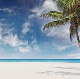 Tropisch strand met palmen in Miami Florida Stock Foto