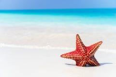 Tropisch strand met zeester royalty-vrije stock foto's