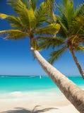 Tropisch strand Oceaangolven, blauwe hemel en palmenachtergrond Royalty-vrije Stock Foto