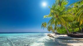 Tropisch strand op de Maldiven Stock Fotografie