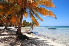 Tropisch strand in Punta Cana Royalty-vrije Stock Foto