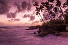 Tropisch strand, Sri Lanka Stock Foto