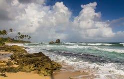 Tropisch strand, Sri Lanka Royalty-vrije Stock Foto's