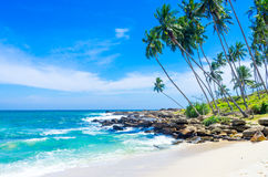 Tropisch strand in Sri Lanka Stock Afbeelding