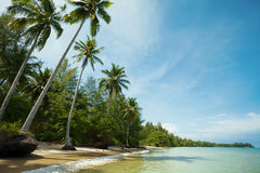 Tropisch strand in zonnige dag Stock Afbeelding