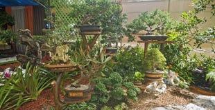 Tropisch toon tuin bij Bloemenfestival, Puerto Rico Royalty-vrije Stock Foto