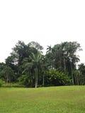 Tropisch tuinen en gebied Royalty-vrije Stock Afbeelding