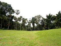 Tropisch tuinen en gebied Stock Foto