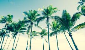 Tropisch uitstekend palmbeeld Stock Afbeelding