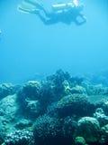Tropisch vrij duikenavontuur Stock Foto's