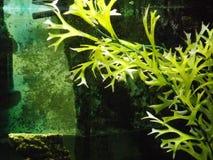 In tropisch water Stock Afbeeldingen
