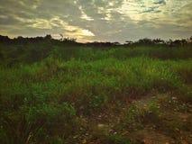Tropisch weiden en bos stock foto