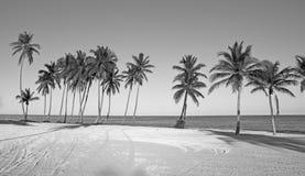 Tropisch wild strand Royalty-vrije Stock Afbeelding