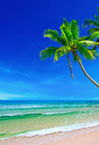 Tropisch wit zand met palmen Stock Afbeelding
