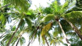 Tropisch wit zandstrand met palmen stock videobeelden