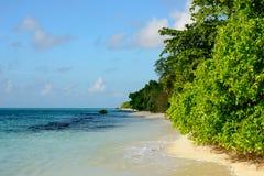 Tropisch zandig strand met inheemse bomen en turkooise overzeese en blauwe hemel met weinig kleine wolken Royalty-vrije Stock Afbeeldingen
