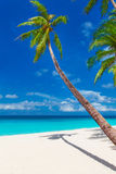 Tropisch zandstrand met palmen, de zomervakantie verticale ph Stock Fotografie