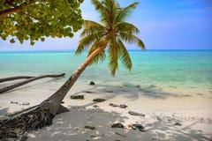 Tropisch zeegezicht met groene palmbladeren, oceaanmening met vawes en palmtakken stock foto