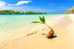 Tropische überwucherte grüne Palme des sandigen Strandes mit klarem Meerwasser auf blauem Himmel des Hintergrundes Stockbild
