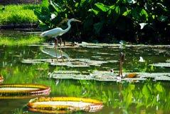 Tropische aard Royalty-vrije Stock Fotografie