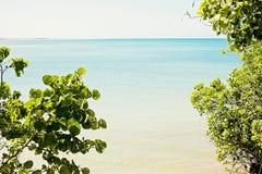 Tropische aard, de Cara?bische Zee, palmen, het eiland, de Dominicaanse Republiek royalty-vrije stock afbeeldingen