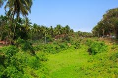 Tropische aard op het gebied van hotels dichtbij Candolim-Strand, Goa, India Stock Afbeelding